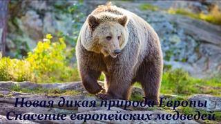 Новая дикая природа Европы /Europe's New Wild (2020) Серия 3 Спасение медведей/Saving Europe's Bears