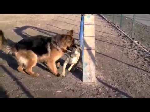Социализация щенка - первый шаг в воспитании.