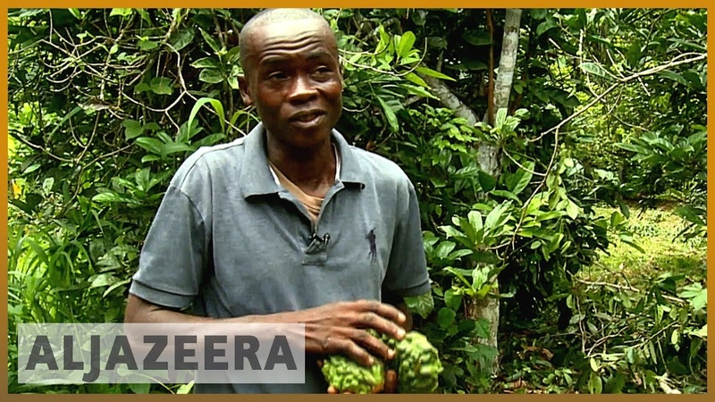 Researchers help improve Ivory Coast's kola nut exports