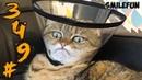 КОТЫ 2020 ПРИКОЛЫ с котами и кошками 2020 Смешные Коты Funny Cats