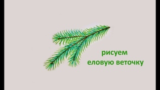 Как нарисовать ЕЛОВУЮ ВЕТОЧКУ! Учимся РИСОВАТЬ ветку ели! draw spruce twig