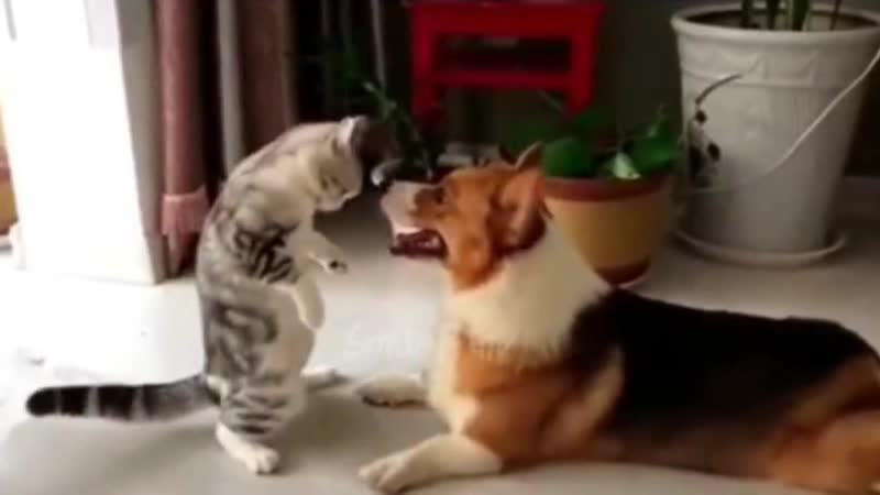 Эй детка потанцуем