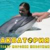 """Центр дельфинотерапии """"Акватория"""" Ялта"""