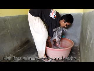 We feared she might die—mange dogs miracle recovery