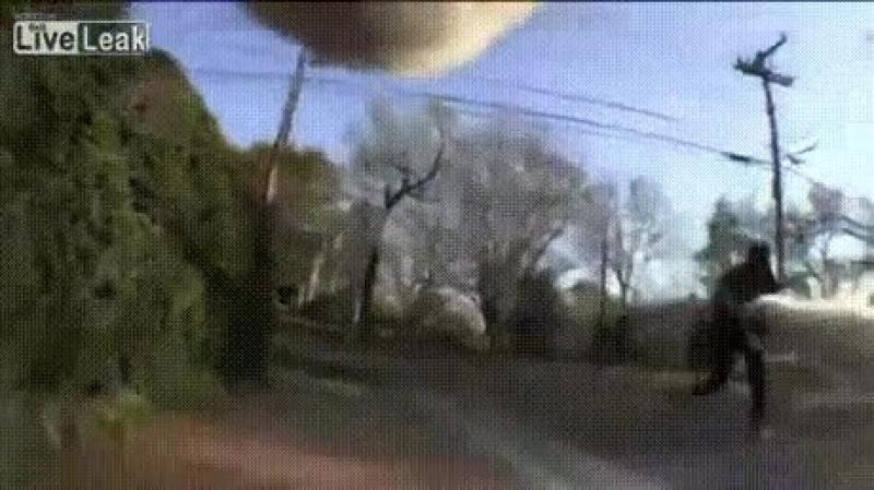 Видео кот бандюга Video cat gangster Dbltj rjn