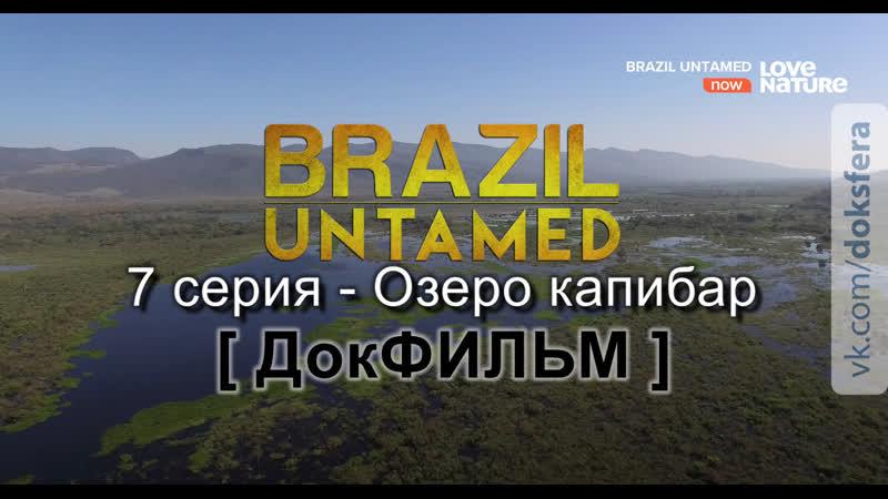 Дикая Бразилия 7 серия Озеро капибар