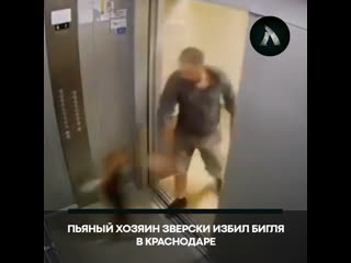 В Краснодаре мужчина избил собаку за то, что она потерялась | АКУЛА