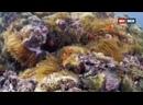 Дикий мир океана 2 серия. Филиппины / Ocean Wild 2020