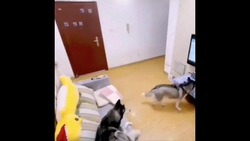 Собачье кино