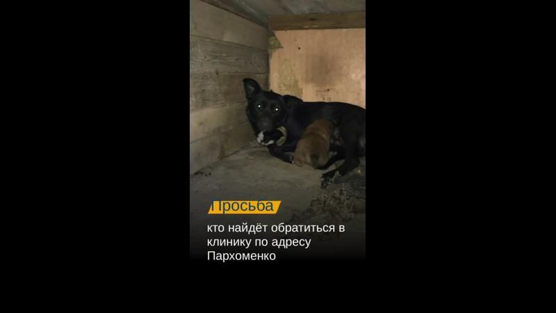 Видео от Ветеринарная клиника доктора Чулковой Волгоград