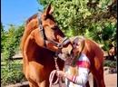 В гостях на конюшне в Италии