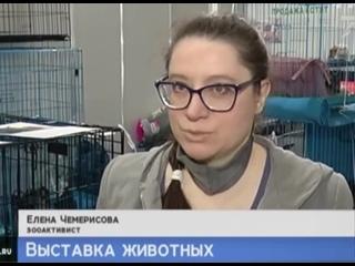 """У меня взяли интервью на выставке котиков в МВДЦ """"Сибирь"""""""