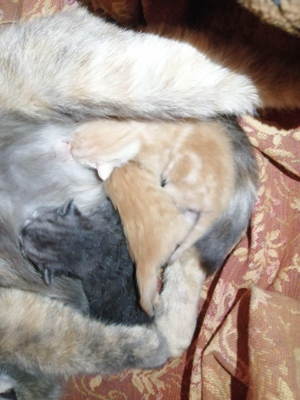 Добрые, милые котята ищут своего хозяина, которого будут греть по холодным вечерам.