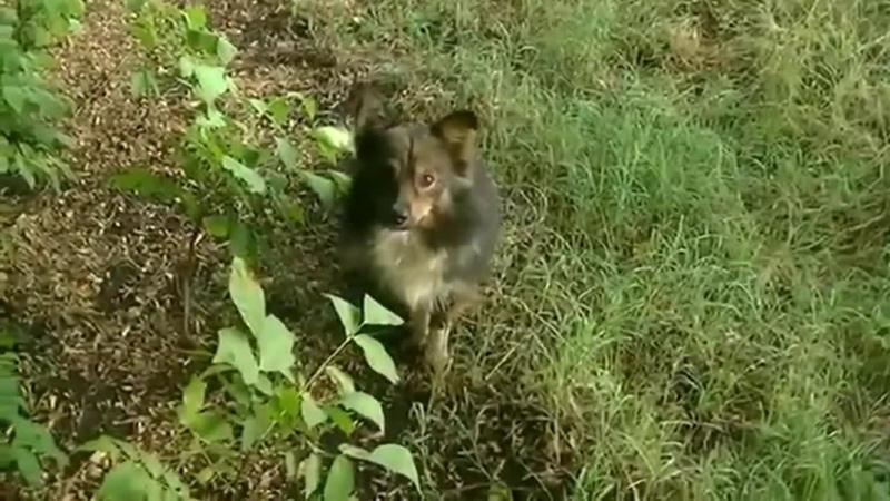 Буктрейлер по книге Даниэля Пеннак Собака Пёс