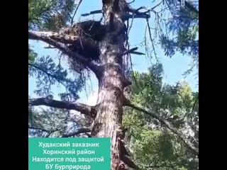 Видео от Хоринский район
