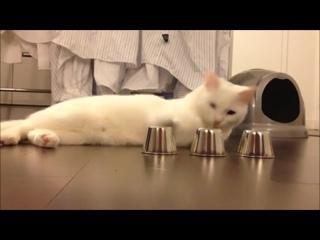 Кручу - верчу, кота запутать хочу! =)