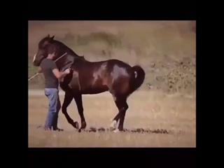 Танцующий конь! video-0-02-05-ee03ee8baf34d806e16c5eb65dc20a7c0fb78510b256212a428992f303703d0b-V
