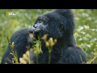 NG: Дикая Уганда (2018) HD 1080