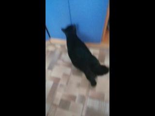 Масяня и Феличка ищут кота :))) Которого нет :)))