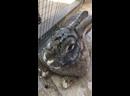 Обзор на зайца
