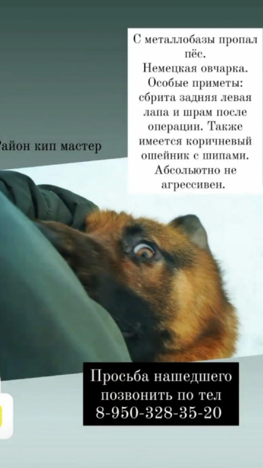 Пропала собака! Район кип мастер.  8-950-328-35-20