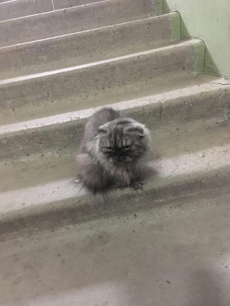 Кто потерял кошку несколько дней живет в подъезде ...