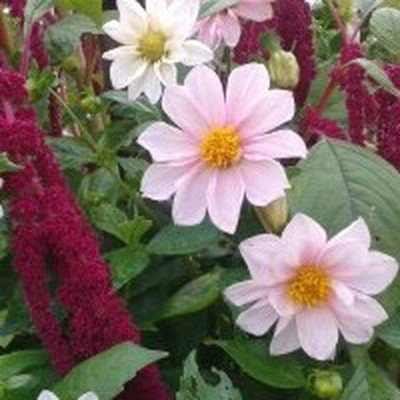 сад и огород вязьма кронштадтская сайт