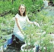 От живой изгороди – к питомнику. Растительный бизнес семьи Орловых из села Вешаловка