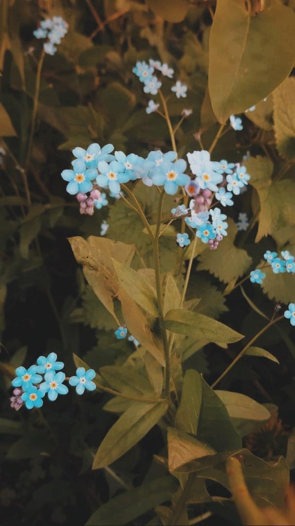 фото из альбома Ксении Трофимовой №15