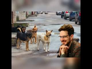Максим Кац душевно спел про свою любовь к собакам *музыкальное видео*шансон года