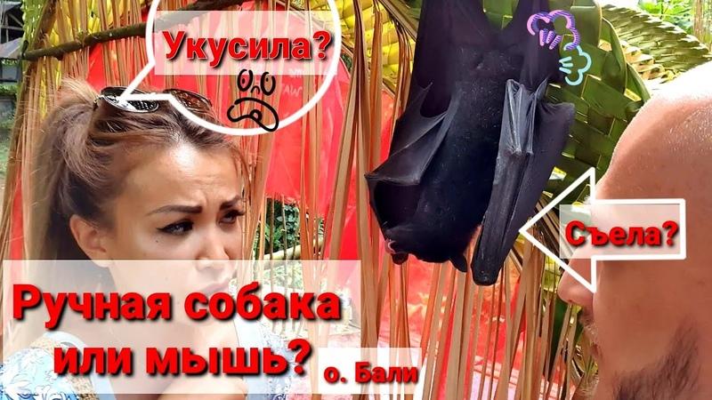 🦇 РУЧНАЯ летучая собака / Крылан ест банан