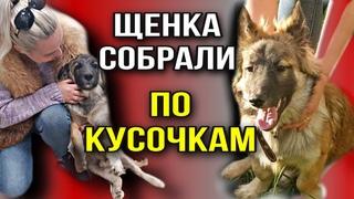 Бездомного щенка собрали по кусочкам в Москве, но он оказался никому не нужен