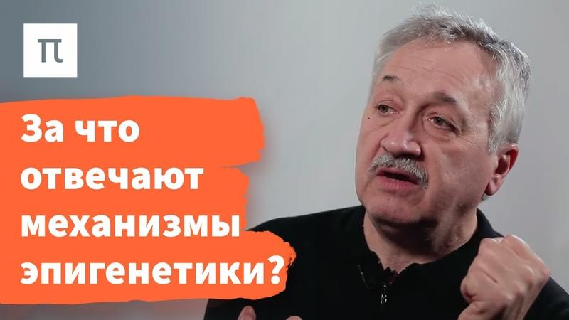 Механизмы эпигенетического наследования — Сергей Киселев ПостНаука