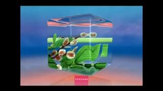 Рекламная заставка ОНТ (верба) 2010-2016