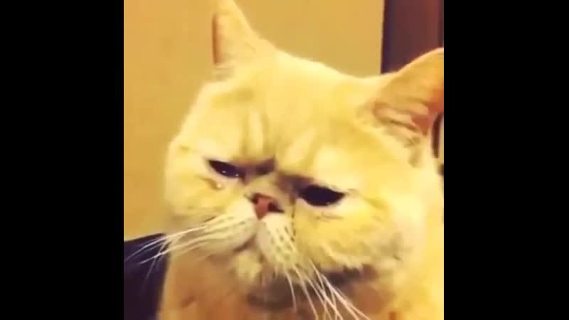 как то так)прусь от слез кота!!))