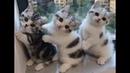 Веселые котята для хорошего настроения! 😸 Подборка приколов с котами и котятами! 💖💖💖