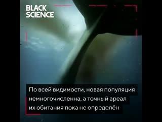 Новая песня китов