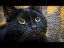 «Может быть, все же накормят» - кот присел, обнял лапки хвостом и с надеждой смотрел на людей