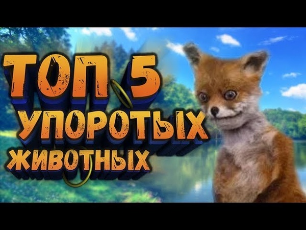 ТОП 5 УПОРОТЫХ ЖИВОТНЫХ by Onechpakman\\лисы\\олень-мышь\\носороги
