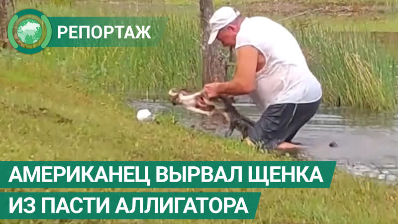 Американец вырвал своего щенка из пасти аллигатора ФАН ТВ