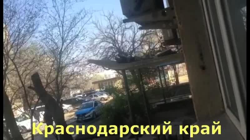 VIDEO 2020 04 15 12 51