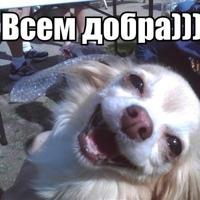 Фотография анкеты Милашки Кошки ВКонтакте