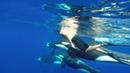 OOM - Orcinus Orca Mayotte (GoPro)