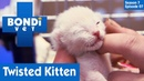 Ветеринар Бондай-Бич Котёнок с вывернутой ногой 7 сезон 7 серия / Kitten Has A Twisted Leg S07E07 Bondi Vet