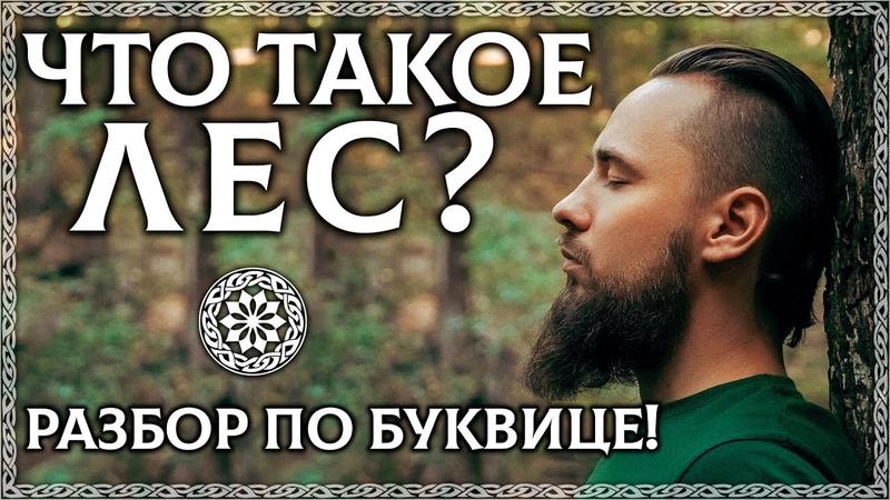 ЧТО ТАКОЕ ЛЕС Буквица объяснит Почему лес это храм природы