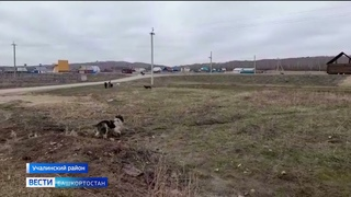 Главу сельсовета в Башкирии задержали после гибели растерзанного бродячими собаками мальчика
