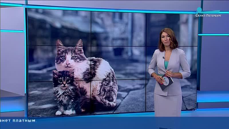 В Петербурге стартовала программа бесплатной стерилизации безнадзорных кошек